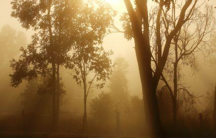 ClimateLaunchpad winners to represent Australia